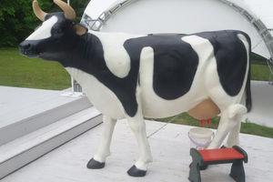 Дойная Корова на свадьбу